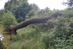 Bourka-stromy-Daniel-3